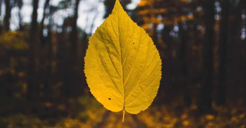 a little leaf