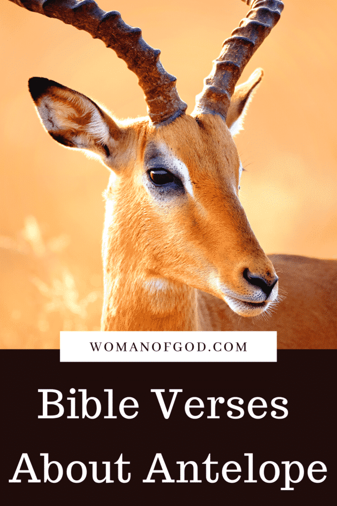 Bible Verses About Antelope pins