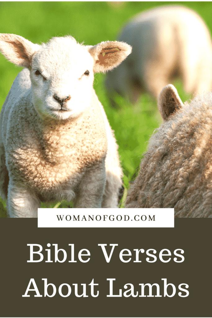 Bible Verses About Lambs pins