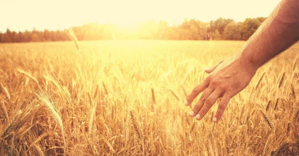 bible verses about the harvest